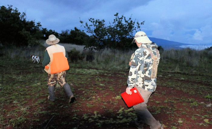 Hawaii Hunters & Researchers Count Game Bird Populations Before Season Opens