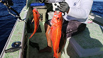 DLNR to Reopen Four Bottomfish Restricted Areas in the Main Hawaiian Islands
