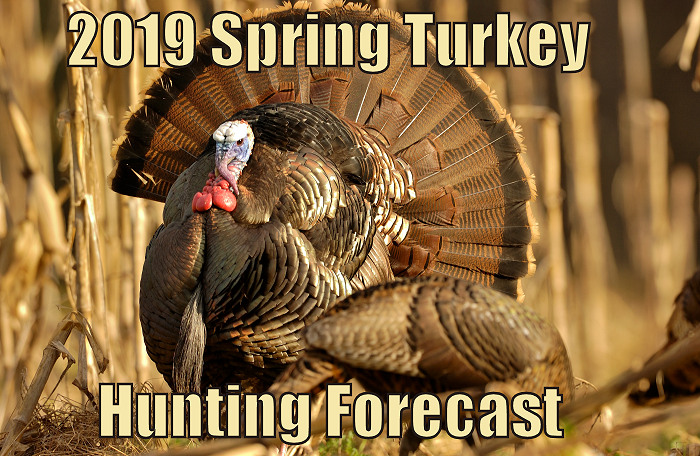 State-by-State 2019 Spring Turkey Hunting Forecast