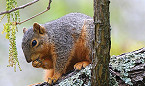 Arkansas 2019 Squirrel Hunting Season Opens